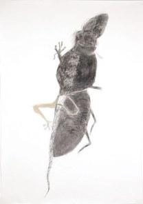 150*105 cm - 2006 Crayon à la cire et cirage sur papier