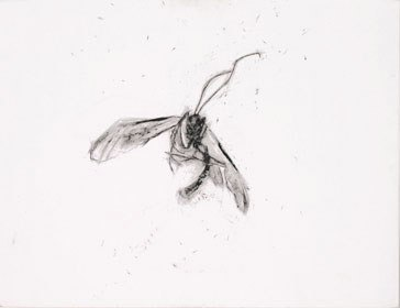 50*65 cm - 2005 Crayon à la cire sur papier